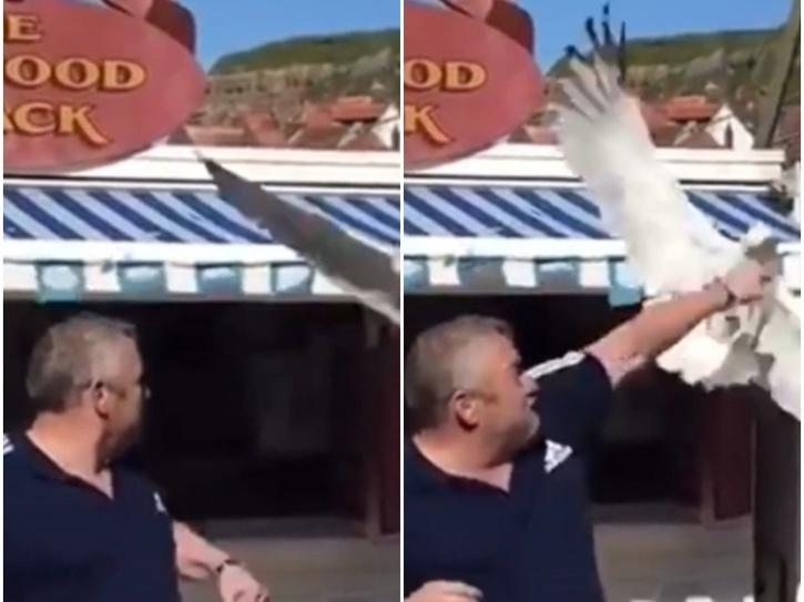man punches seagull