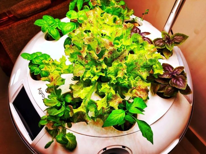 Delhi Startup Creates AI-Powered 'Smart' Garden Tech To Grow Plants Without Soil