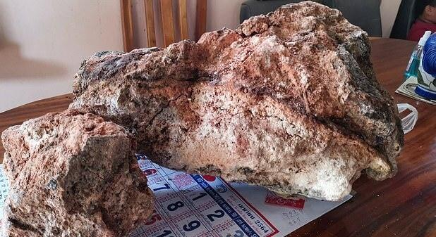 Thai fisherman finds whale vomit worth Rs 30 crore
