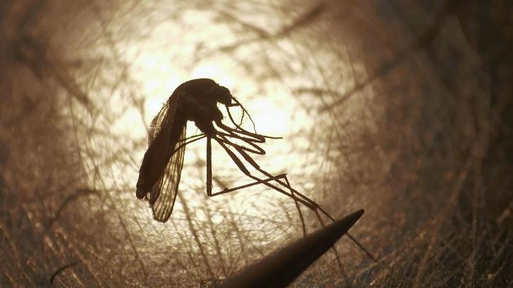 Mosquitoes test positive for rare, potentially deadly virus in Connecticut