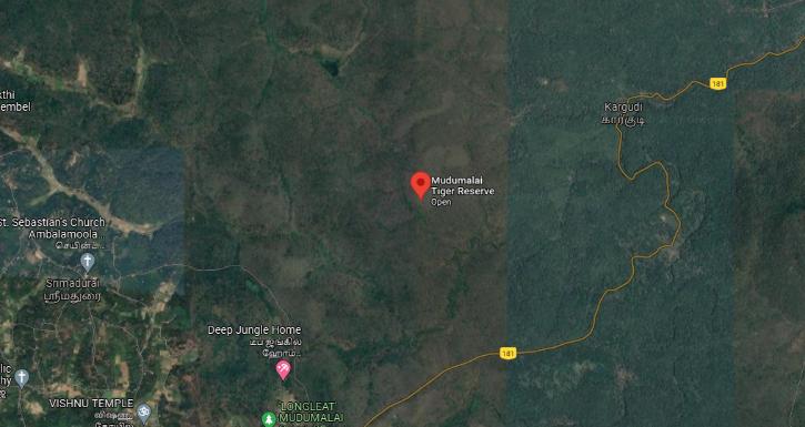 mudumalai tiger reserve
