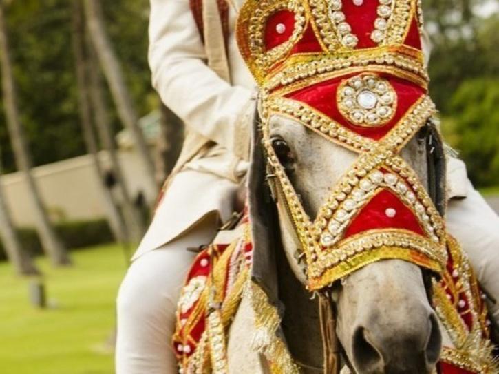 horse india