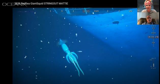 squid-creature