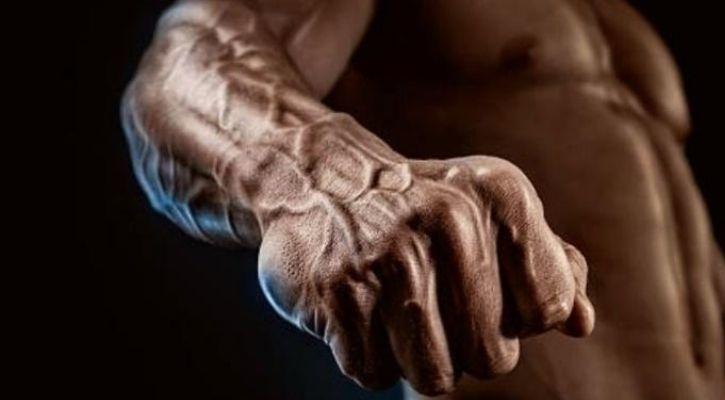 median artery evolution human arm
