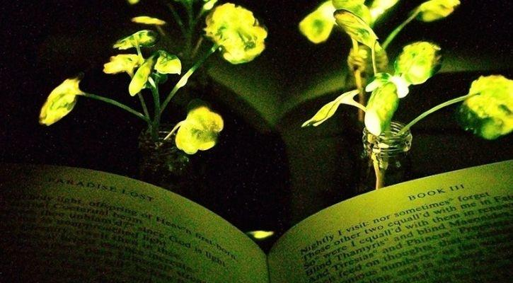 light emitting plants MIT