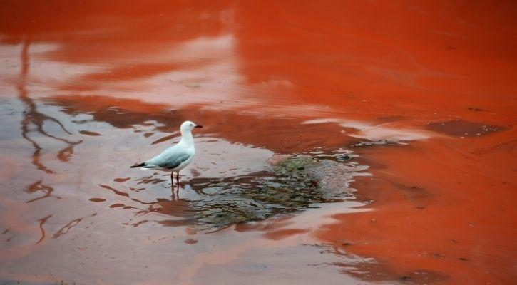 bird standing in the red river