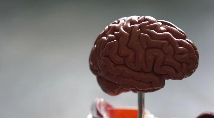 brain model for medical study
