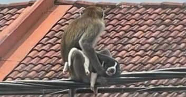 Puppy taken hostage by a wild monkey