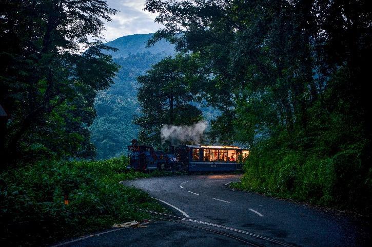 Jungle Tea Toy-Train Safari