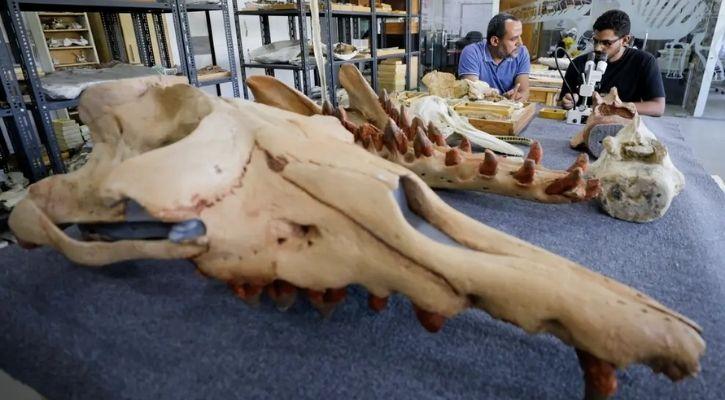 four legged whale fossil