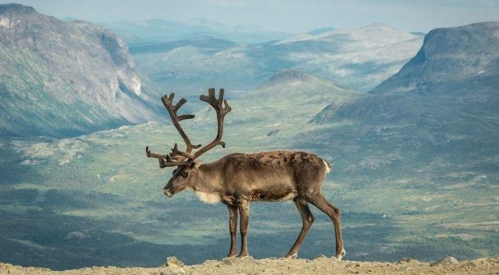 animals evolution mountains