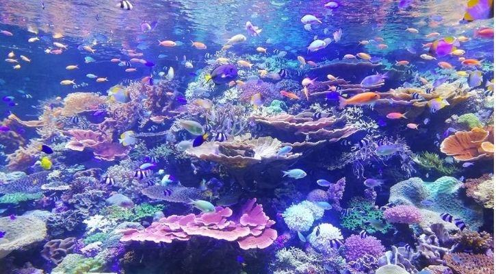 coral reefs healthy