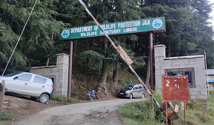 Markhors in Kashmir