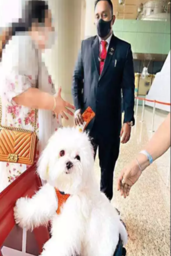 dog-in-airport