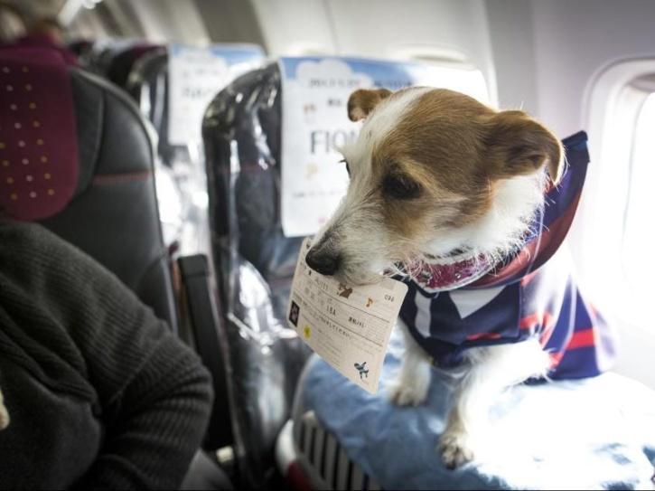 dog-in-flight