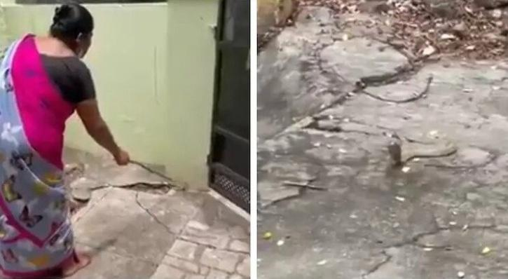Woman gently requests cobra to leave her house