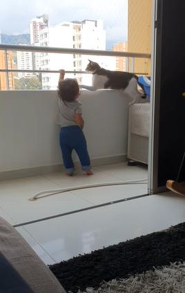 cat shoos away the kid