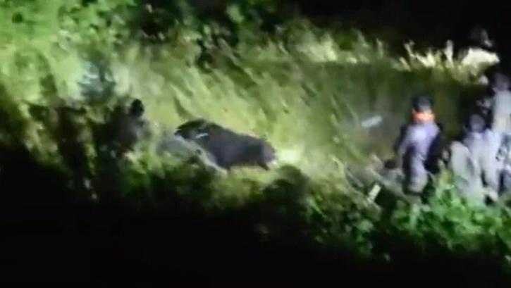 sloth bear killed