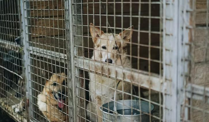 câini de salvare |  Imagine reprezentativă