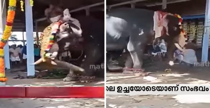 Priest Falls As Elephant Goes Berserk In Kerala