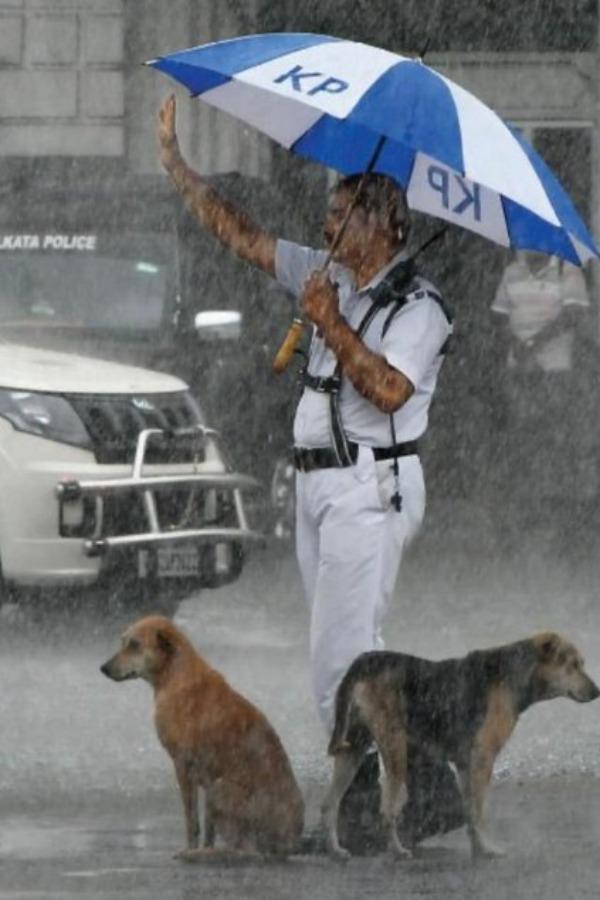 Heartwarming! Kolkata Cop Gives Shelter To Stray Dogs Under His Umbrella