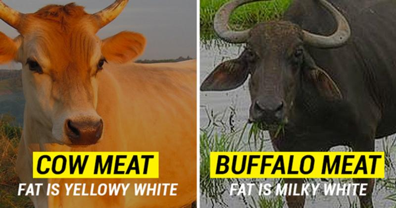 14 Differences Between Cow And Other Types Of Meat That Might Save