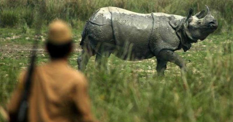 Rhino Poaching In Assam Is A Major Problem And The Assamese