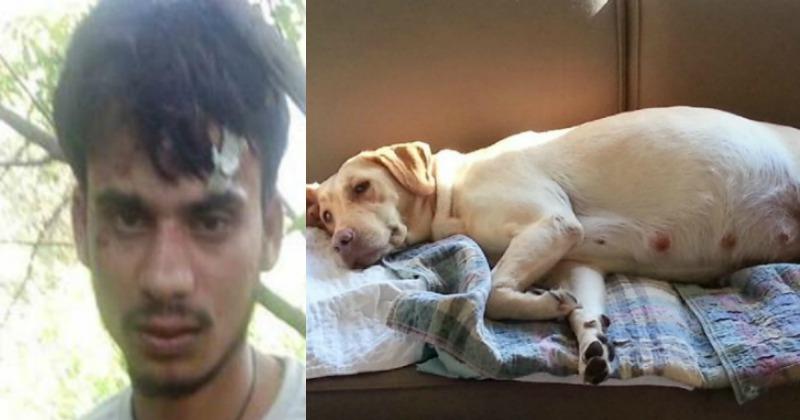Shocking! Man Held For Killing Pregnant Dog, Having Sex