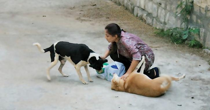 Women Feeding Stray Dogs