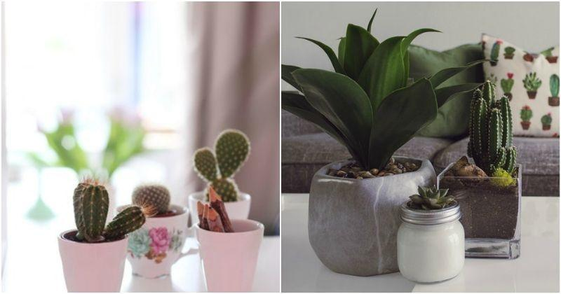 11 Indoor Plants That Will Absorb All The Negative Energy And