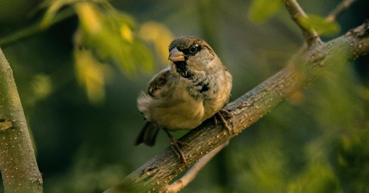 The House Sparrow is abandoning Delhi for good