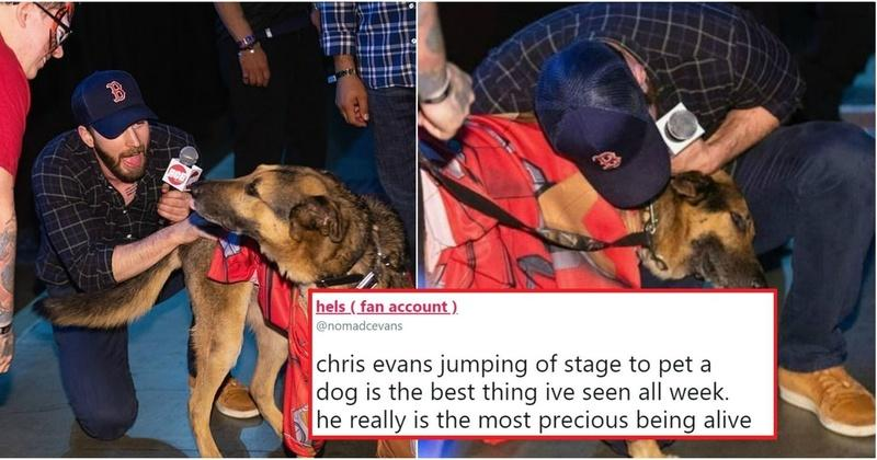 Chris Evans:Chris Evans Interrupted Comic Con Panel To Pet A