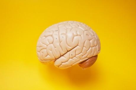 Super Human Brain