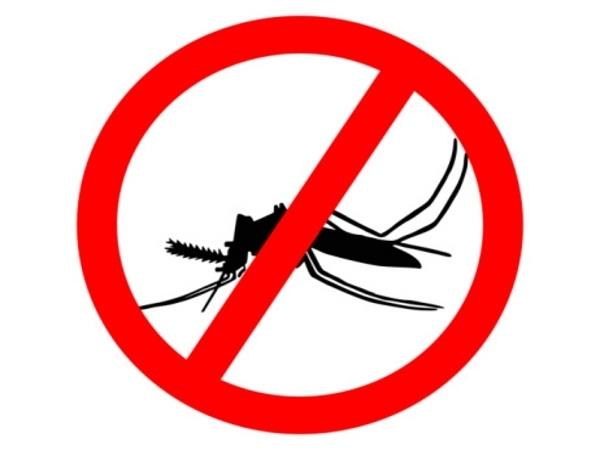 You Can Prevent Dengue Fever