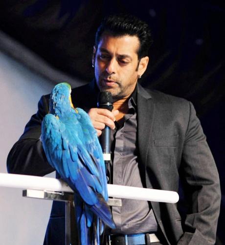 Salman Khan in Bigg Boss 6