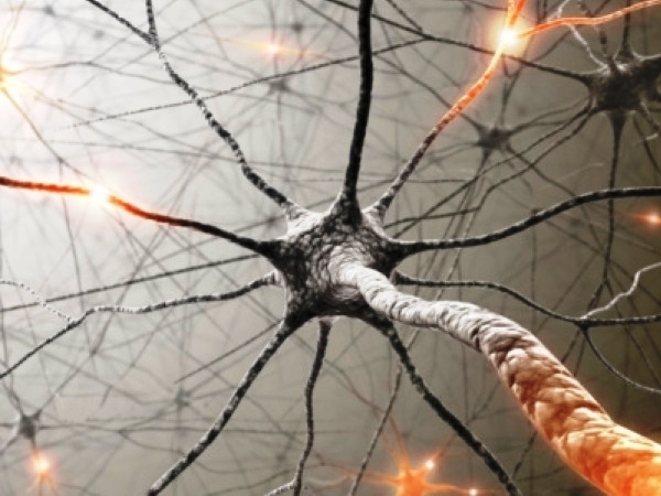 Understanding Peripheral Nerves : Types, Peripheral Neuropathy, Symptoms And Tests