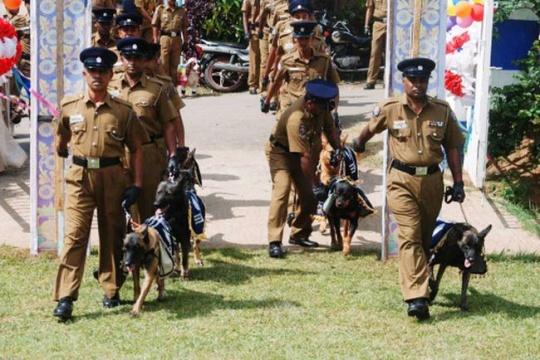 Dog Wedding in Sri Lanka
