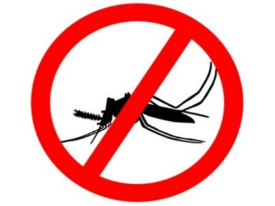 Malaria Parasite's Growth Can be Halted
