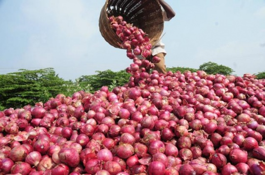 Onion Over-supply Leads To Crisis