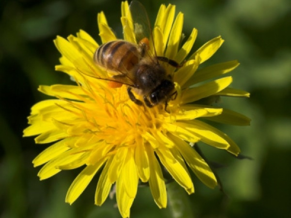 New Therapy To Treat Backache With Bee Venom Shots