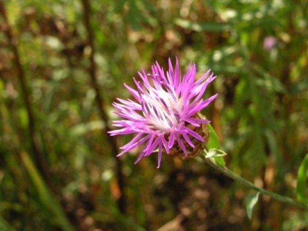 Skin Cancer: Protect Against Skin Cancer With Milk Thistle