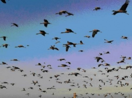 Humans Learnt to Speak From Birds' Singing