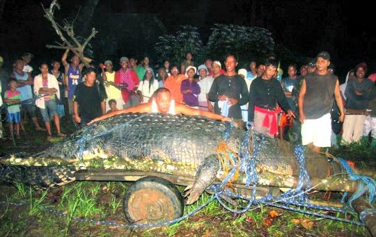 World's Largest Crocodile Dies in Philippines