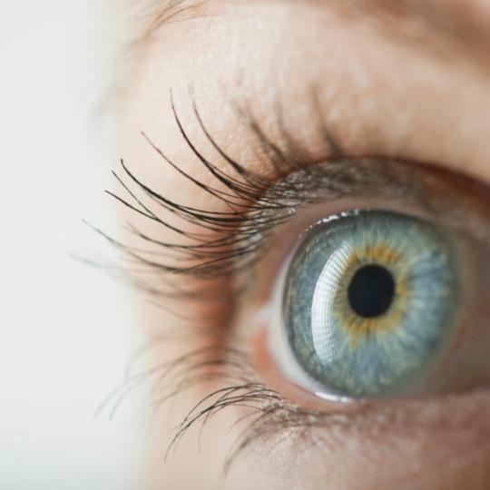 Ray of Hope: Lab-Made Retina