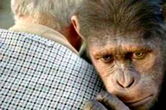 Ancient Apes Didn't Walk Upright