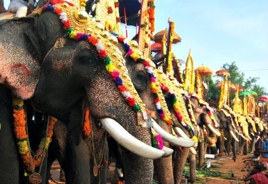 Kodanad: The Land of Elephants