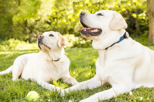 Wearable Devices for Your Pets