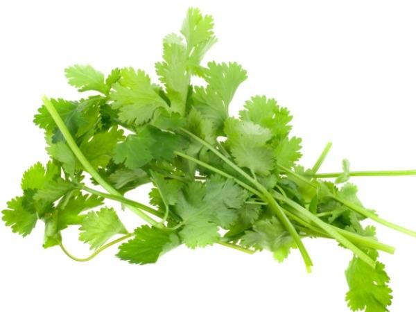 Food Basics:  14 Health Benefits Of Coriander