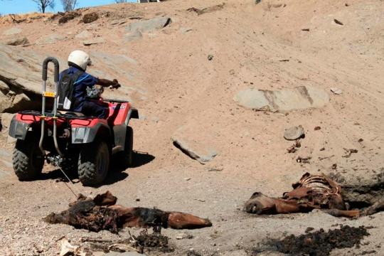 Australia Set to Cull 10,000 Wild Horses