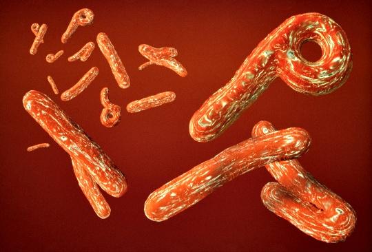 Ebola Bug's Secret Mechanism Revealed